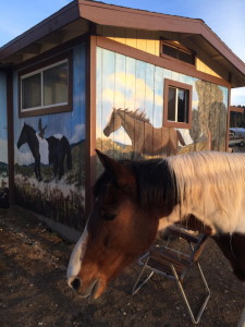 Horse Murals 3 Big Bear CA 2015
